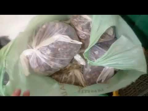 На Житомирщині СБУ вилучила понад чотири тонни бурштину-сирцю