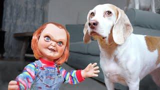 Dogs vs Lil' Big Chucky Prank: Funny Dogs Maymo, Penny & Potpie by Maymo