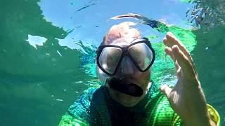 Swimming with sea loins or seals in Bahia de Los Angeles. It was amazing!
