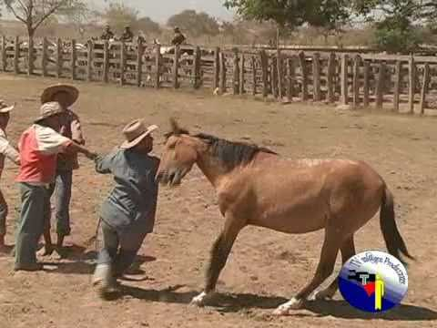 faena llanera 1RA PART 3M Miguel Angel Rojas Sarmiento