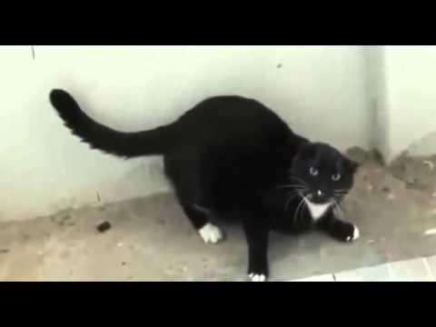Lustige Katzen Videos – süße Katzen