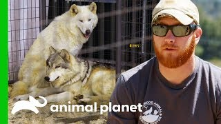 Investigating Animal Cruelty at a Minnesota Expo | Wolves And Warriors