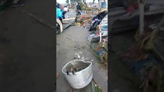 Video 12 Jam setelah Tsunami di anjungan kota Palu MP3, 3GP, MP4, WEBM, AVI, FLV Desember 2018