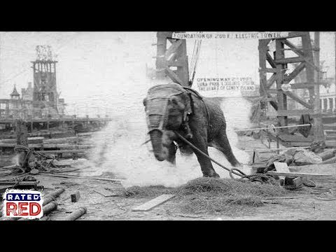 Strange Heartland History: Did Thomas Edison Really Fry an Elephant with Electricity?