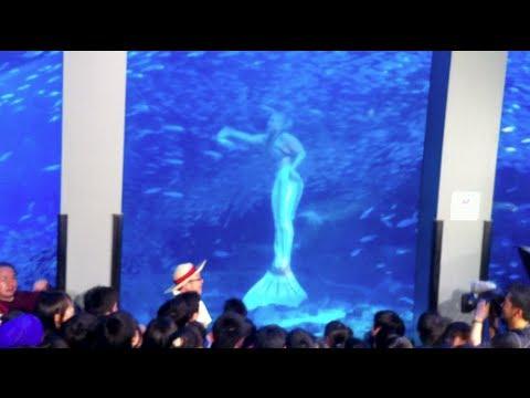 Real Mermaid Footage in Japan Aquarium on Live TV