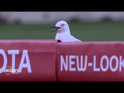 Sammy the Seagull gets hit by the ball but makes a miraculous recovery. Even tries to have a go at the ball later.