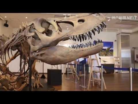 丹波で恐竜の特別展