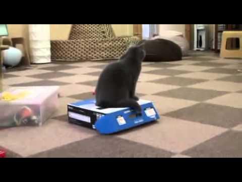 Gato matón. Cosas de gatos en la casilla