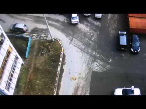 Водитель задавил собаку, отдыхавшую во дворе