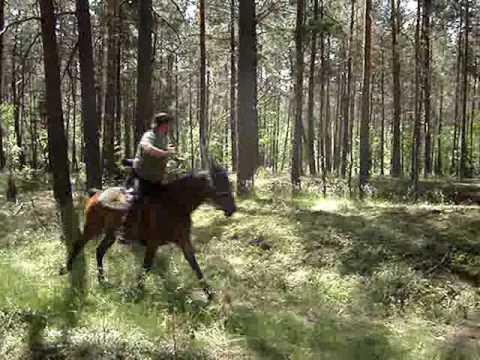 Zurawiejki 2007 - mounted archery in the forrest (видео)