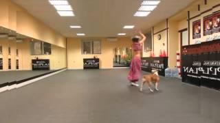 Hot Girl Và Chú Chó Cưng Nhảy Nhạc Ấn Độ Cực Đỉnh, clip giai tri, giai tri tong hop