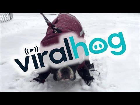 Oscar ei todellakaan tykkää lenkkeillä lumessa – Jarrut päälle!