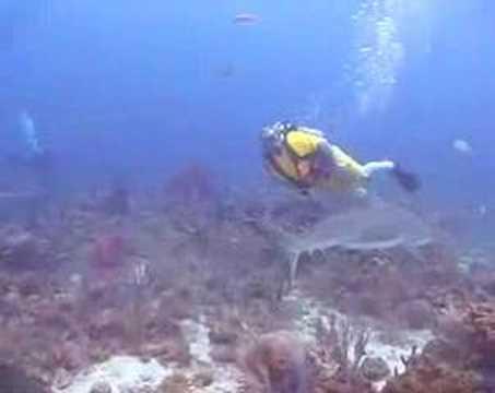 Tiburones en Roatán