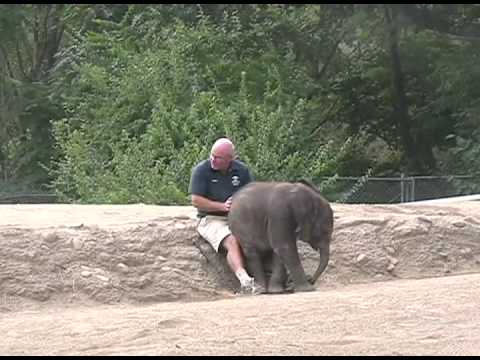 baby elephant sits on keeper's lap