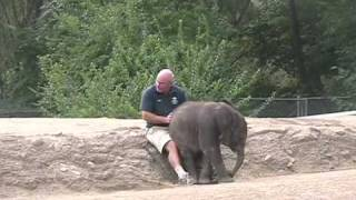 The Baby Elephant Who Thinks She's A Puppy :))