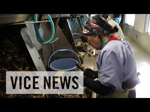 Exploiting Foreign Workers: Japan's Labor Pains (Trailer)