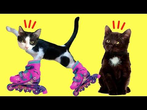 24 horas en patines con Laia y Ana y las gatitas en mi casa / Videos de gatitos