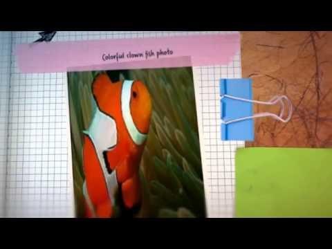 Video of Fish Puzzle