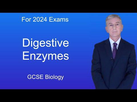 GCSE Science Biology (9-1) Digestive Enzymes