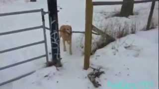 Dogs Trying To Fit Sticks Through Small Spaces