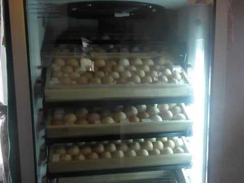 Search result youtube video Переворот+яиц+в+инкубаторе