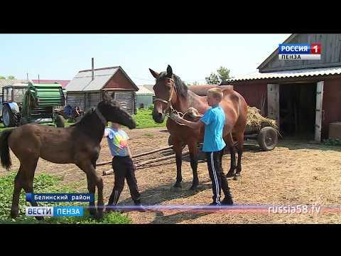 Успешные пензенские фермеры поделились своим опытом - DomaVideo.Ru
