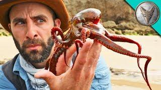 Video WILL IT INK?! - Catching an Octopus MP3, 3GP, MP4, WEBM, AVI, FLV Januari 2019