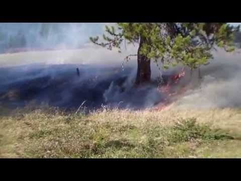 Obadiah's Wildfire Fighters: Prescribed Burning
