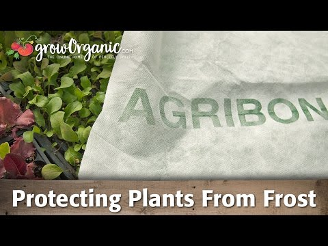 How to Protect Plants from Frost - Low Tunnels