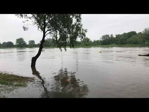 Wideo: Wysoki stan Odry w Głogowie