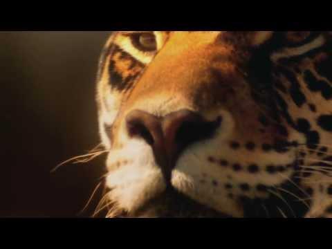 Thomas Bergersen-Aura(Long Version/Epic Cinemati Mountage) (видео)