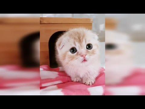 En Sevimli Yavru Kediler - Küçük Kediler - Yavru Kedi Videoları