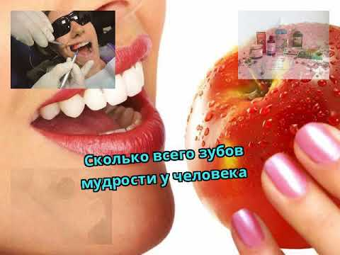 Сколько всего зубов мудрости у человека