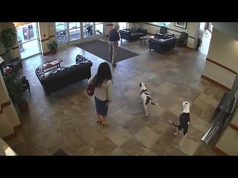 Two Dogs Walk Into A Hospital