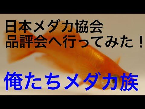 改良メダカ展示会へGO!