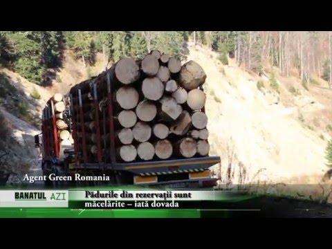 Pădurile din rezervații sunt măcelărite – iată dovada