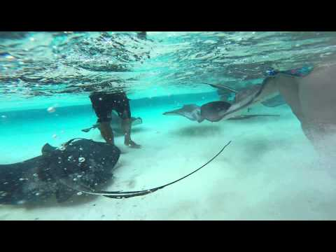 GoPro Video of Stingray City in Grand Cayman