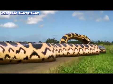 Pirahna Giant Snake  Movie Review