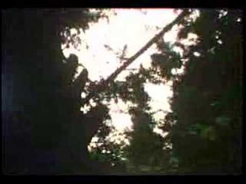 Vengeful - Sentenced online metal music video by VENGEFUL