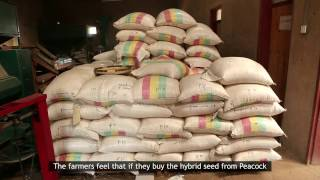 Capstone Seeds in association with USAID