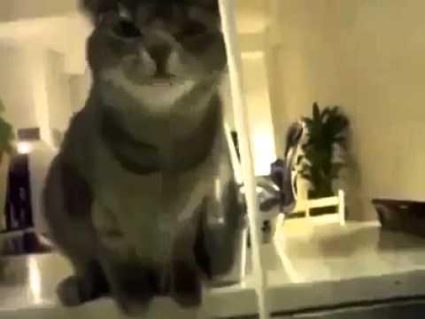 gatti straordinari