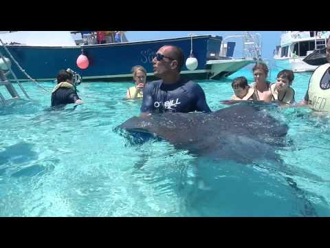 Sting Rays in Grand Caymen