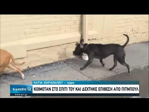Εύβοια: Επίθεση pitbull σε άνδρα μέσα στο σπίτι του | 04/07/2020 | ΕΡΤ