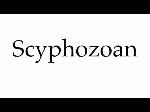 How to Pronounce Scyphozoan