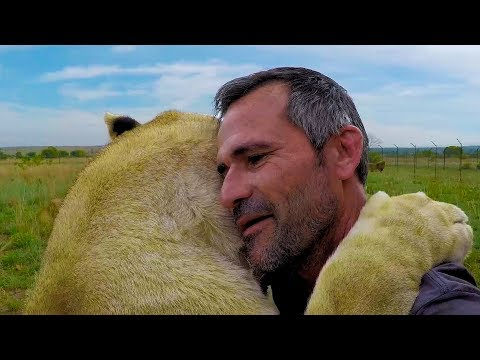 Lions are TOUGH | The Lion Whisperer (видео)