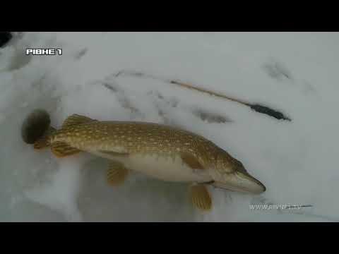 <a href='/Info/?id=88004' >Ловля щуки на жерлиці взимку - Секрети успішної риболовлі! [ВІДЕО]</a>