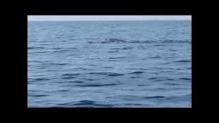 Sortie en mer le 27 septembre 2015, baleines et cachalot