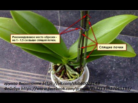 Цветение уход за орхидеями в домашних условиях