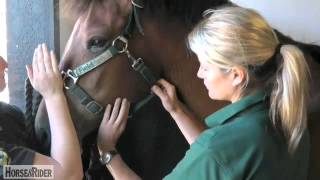 Liphook United Kingdom  city photo : How to Take a Facial Pulse with Liphook Equine Hospital | HorseandRider UK