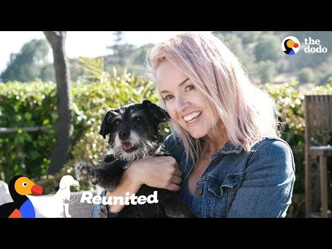 Rescue Dog Reunited With The Foster Mom Who Never Gave Up On Her | The Dodo Reunited